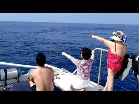 Ko'Olina MARINA, Ohau, Dolphin & Whale watching (w/snorkling), HAWAII
