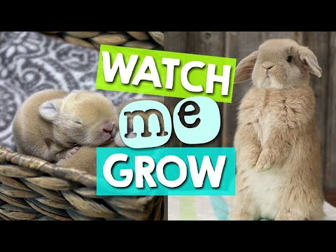 How Fast Does a Bunny Grow? 1 to 16 Weeks (Time-Lapse)