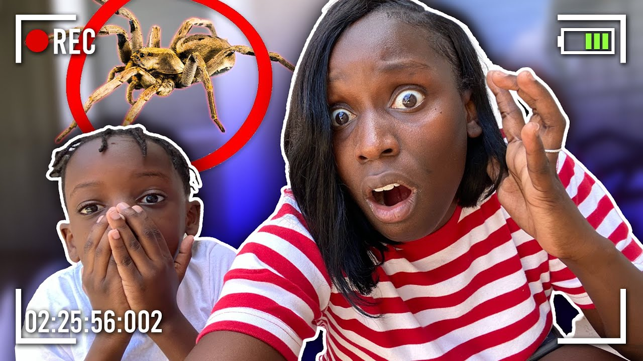 We Caught A MASSIVE SPIDER In Our House *EMERGENCY EXTERMINATION*