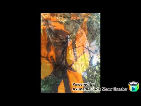 Bowhunting slideshow from a treestand in The SHNF