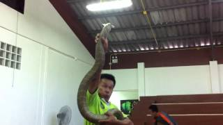 Phuket Cobra Show and Snake Farm Thailand