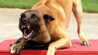 Рычание собаки (3D звук)