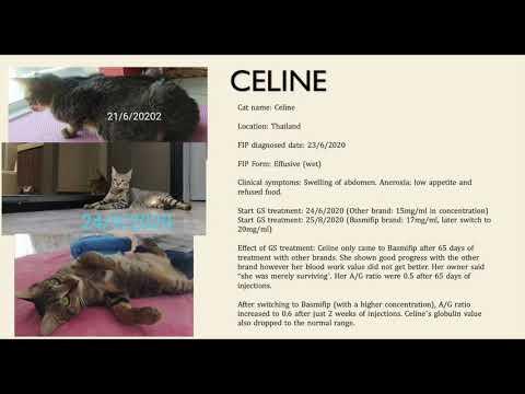 Basmi Feline Infectious Peritonitis (FIP) Treatment Success Story - Part II