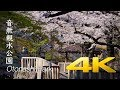 [Sakura] Otonashi Shinsui Park - Tokyo - 音無親水公園 - 4K Ultra HD
