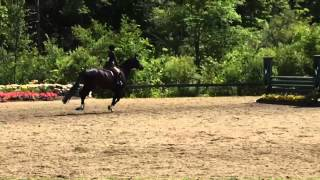 Video Lady Juliette Small Junior Hunters- Vermont Summer Festival download MP3, 3GP, MP4, WEBM, AVI, FLV Oktober 2018