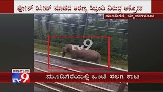 An Elephant Wandered Into a Village   Tension Prevailed in The Mudigere, Chikkamagaluru