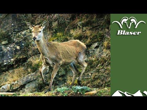 Scottish Hind Hunt