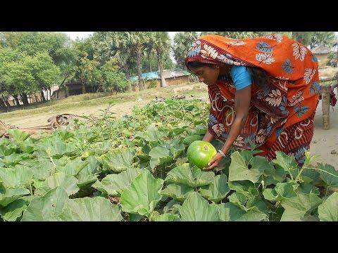 Jardins potagers biologiques en Inde