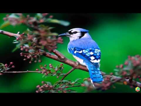 Красивые птицы Лучшие обои для рабочего стола
