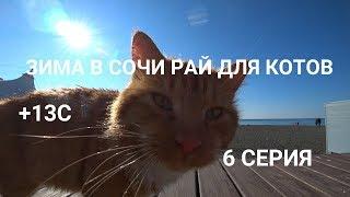 Куда поехать зимой в России отдыхать? Черное море, Сочи зимой.