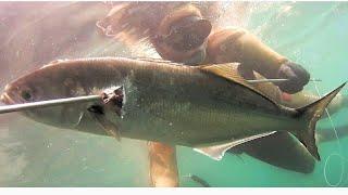 Kofana Avı (Spearfishing Blue Fish)