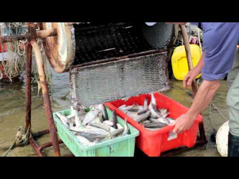 Fish for the Future: Sustainable Fishing Communities in Australia