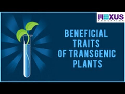 Beneficial Traits of Transgenic Plants