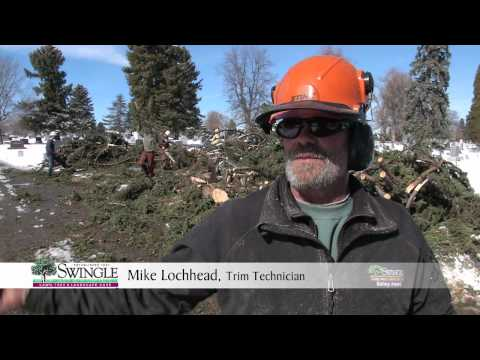 Tree Removal after a wind storm - Denver and along the Front Range