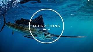 Migrations Part 1: Sailfish