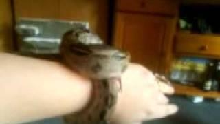 Sabbel and a snake