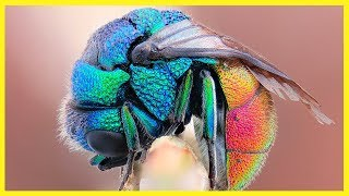 These Rare Animals Have Amazingly BEAUTIFUL Unique Colours
