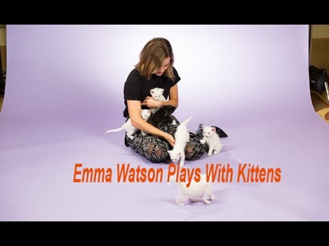 Emma Watson Plays With Kittens When She Answering The