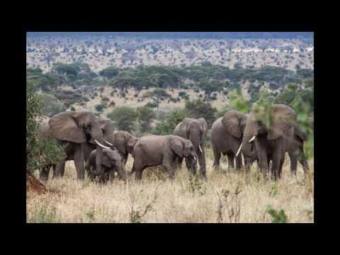 Tanzania  Top 10 Tourist Attractions   Video Travel Guide