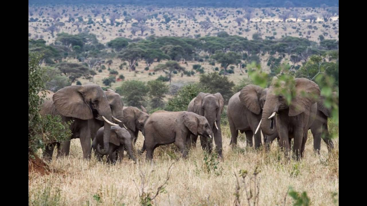 15 Top-Rated Tourist Attractions in Tanzania   PlanetWare  Tanzania Famous Places