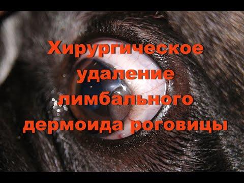 Хирургическое удаление лимбального дермоида роговицы у собаки