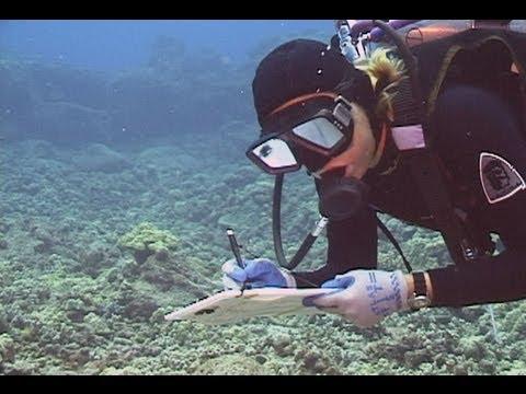 WHAP: West Hawaii Aquarium Project