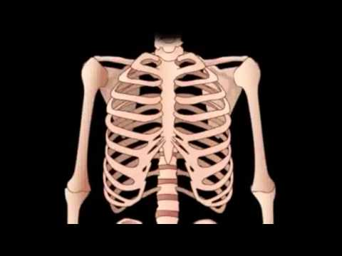Learn About The Human Skeleton | Human Anatomy