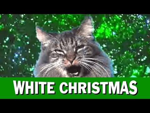 Jingle Cats White Christmas