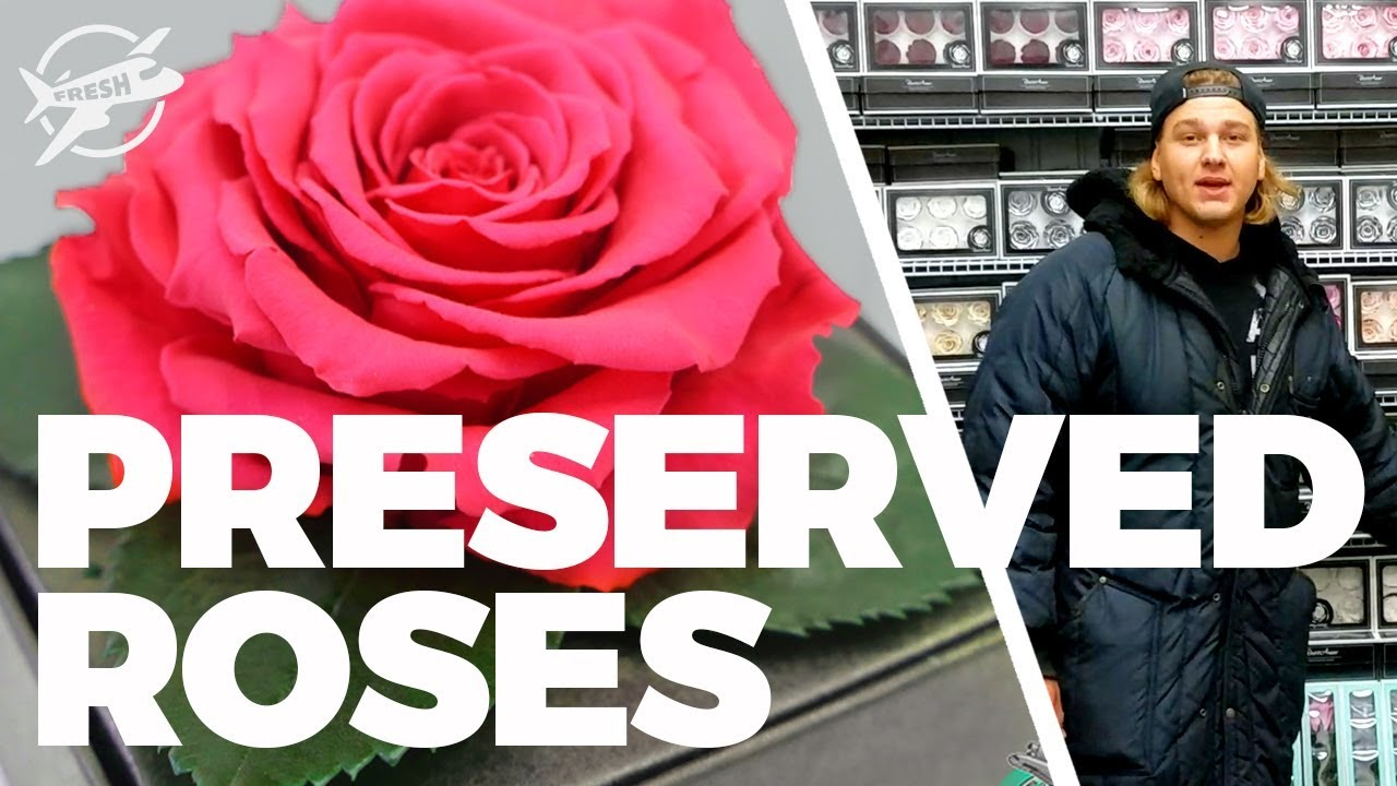 Jftv Largest Inventory Of Preserved Roses In Miami With Casey