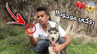 وصلتني ذاكرة من شخص مجهول فيه حقيقة كلبي روكي !! انصدمت