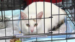Yvelines | Maurepas : Une opération pour adopter des chats