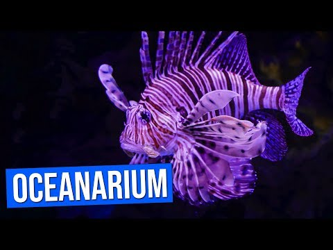 Aquarium (Oceanarium) de Lisbonne |  Aquarium Lisbon | Oceanário de Lisboa