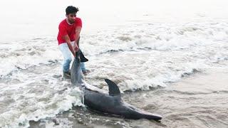 We Rescued A Dolphin | Pramod Rawat