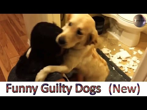 Funny Guilty Dogs Compilation (NEW)