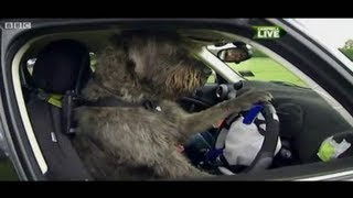 Can your Dog Drive me Home? A Driving School For Dogs In New Zealand