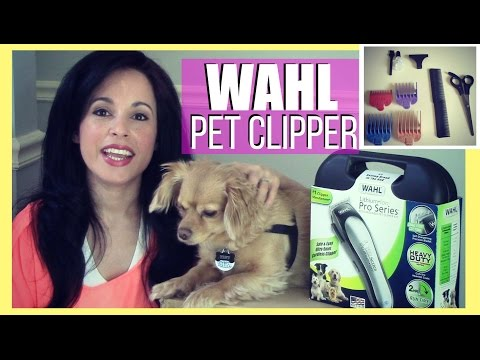 WAHL Lithium Ion Pro Series Pet Clipper Kit || REVIEW & DEMO Chiweenie
