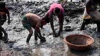 দেখুন কীভাবে বাংলাদেশের গ্রাম অঞ্চলের মানুষ পুকুর সেচে মাছ ধরে ||  people in Bangladesh fishing