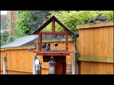 How to Pigeon Proof your Bird Table
