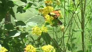 Sweet Briar Nature Center: Butterfly House