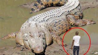 1 на Весь Мир Аномально Большие Животные Снятые на Камеру