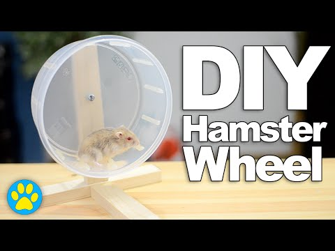 DIY Hamster Wheel | #DIYJuly