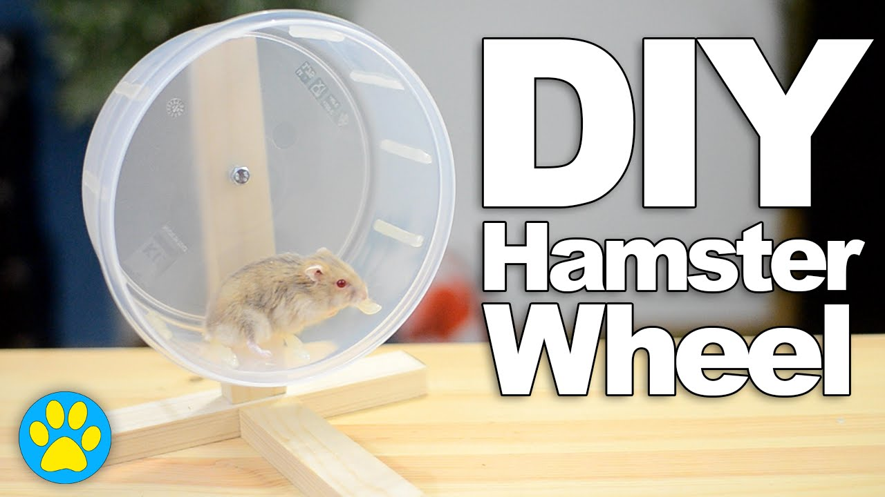 hamster ball free play online