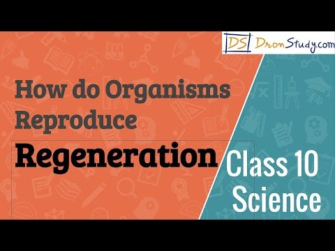 How do Organisms Reproduce - Regeneration : CBSE Class 10 Science