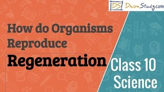 Class 10 Science How do Organisms Reproduce - Regeneration