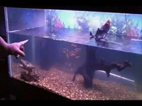new 125g snapping turtle aquarium youtube