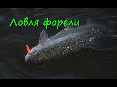 Ловля озерной форели на спиннинг  Часть 2