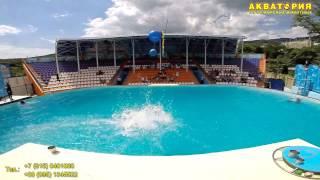 """Театр морских животных """"Акватория"""" (Ялта): ария дельфинов"""