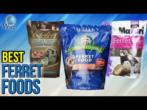 8 Best Ferret Foods 2017