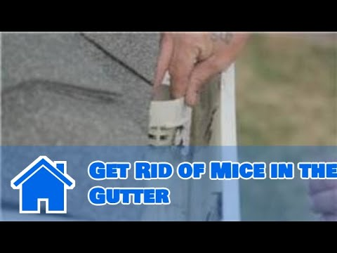 Gutter Maintenance How To Get Rid Of Mice In The Gutter
