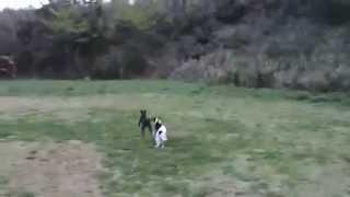 ブラックの男の子飼い主様募集中です。 http://www.k2.dion.ne.jp/~l-john/
